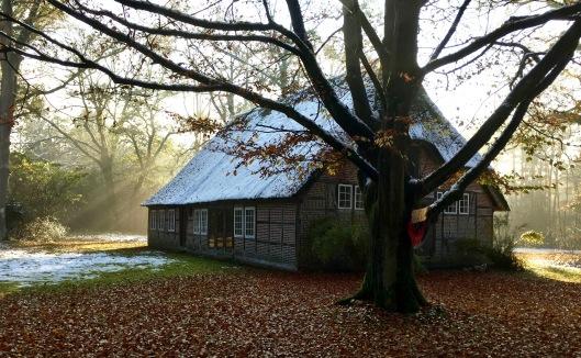 Tanzheimat im Novemberlicht.jpg